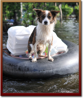 Disaster Relief Support for Pets